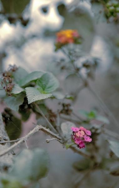 Dusty Flowers